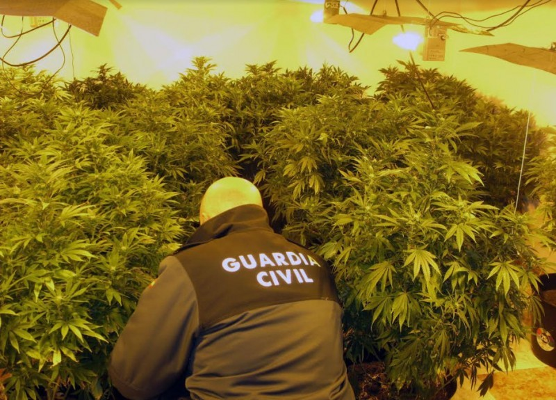 <span style='color:#780948'>ARCHIVED</span> - Illegal marijuana plantations held responsible for frequent power failures in Sevilla