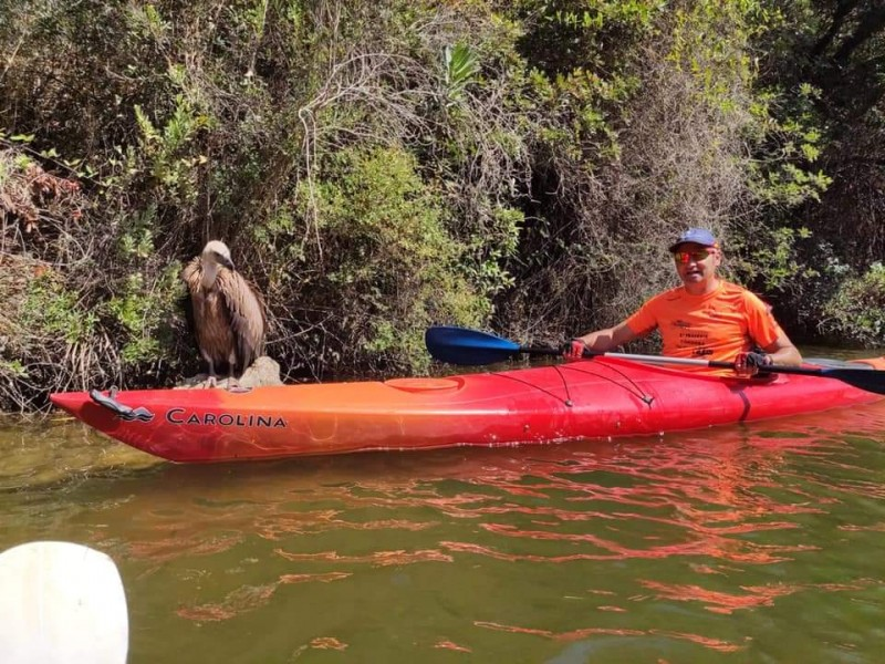 <span style='color:#780948'>ARCHIVED</span> - Griffon vulture rescued by kayak in Hornachuelos, Córdoba