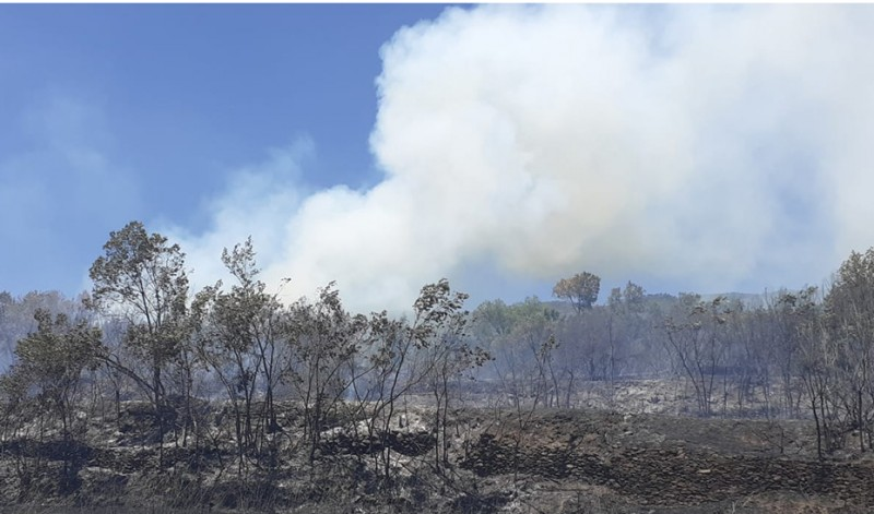<span style='color:#780948'>ARCHIVED</span> - Raging forest fires in Andalusia burn through 1,000 hectares in one weekend