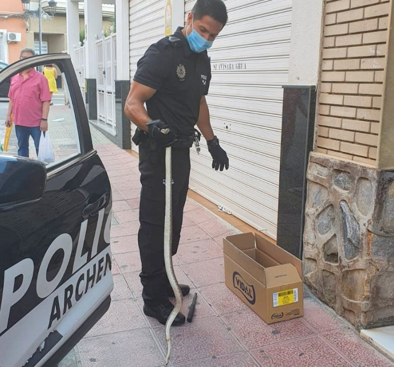 <span style='color:#780948'>ARCHIVED</span> - Slippery customer for Archena local police