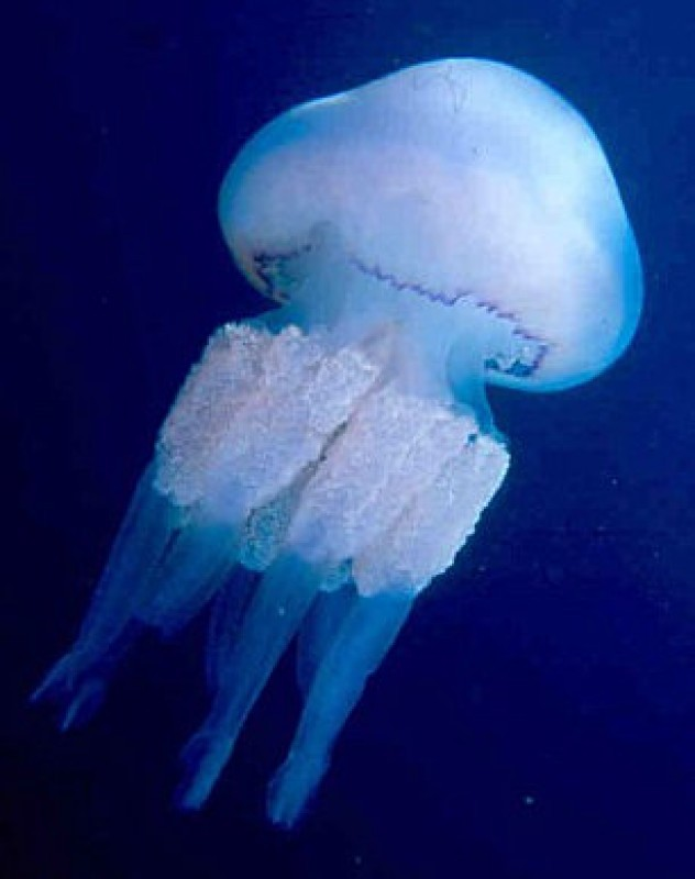 <span style='color:#780948'>ARCHIVED</span> - Reports of jellyfish stings and reactions to insect bites down 80 per cent in Alicante