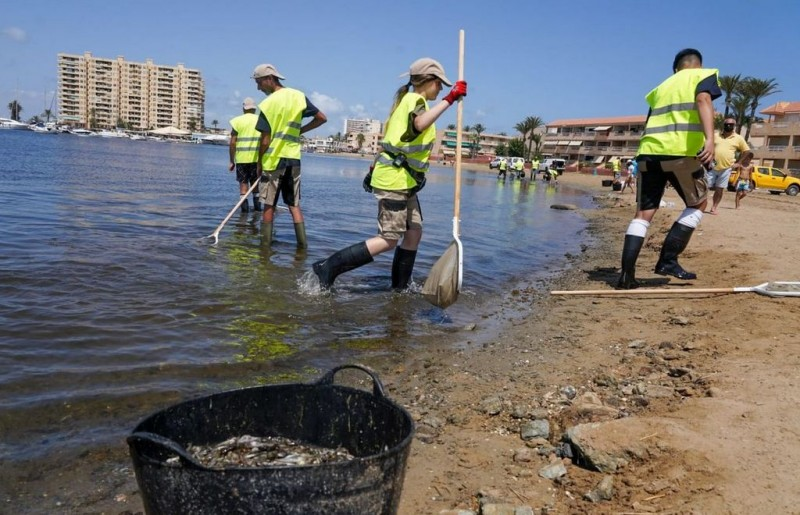 <span style='color:#780948'>ARCHIVED</span> - ANSE explains; fish are dying through lack of oxygen but political inaction is killing the Mar Menor