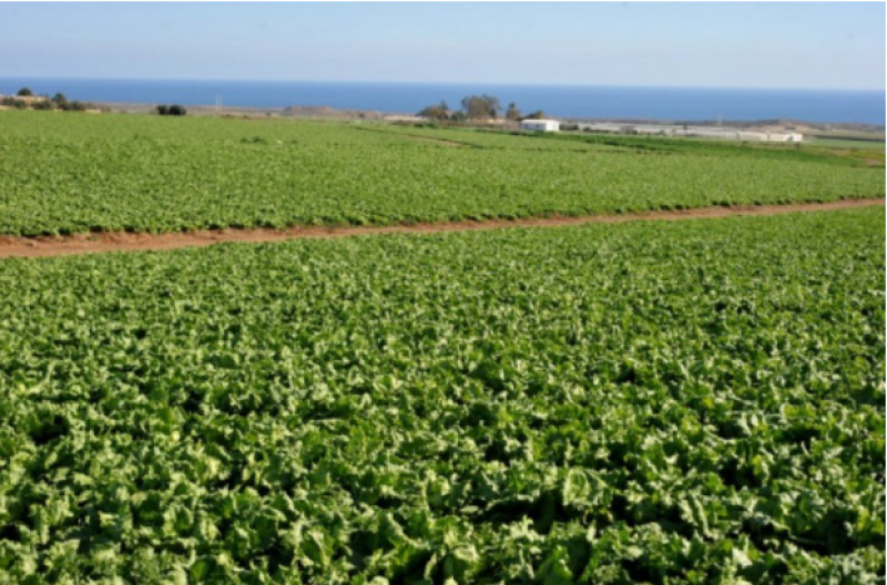 <span style='color:#780948'>ARCHIVED</span> - Spanish lettuce producers on alert after E. coli discovered in Finland