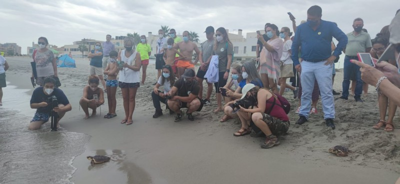 <span style='color:#780948'>ARCHIVED</span> - 15 loggerhead turtles hatched in La Manga are returned to the sea