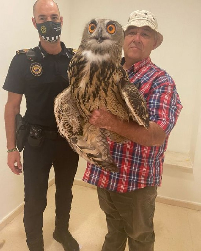 <span style='color:#780948'>ARCHIVED</span> - Injured eagle owl rescued in Albatera, Alicante