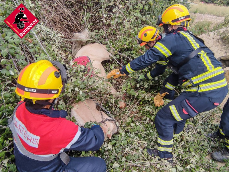 <span style='color:#780948'>ARCHIVED</span> - Horse rescued by firefighters after fall with rider in Alcoy