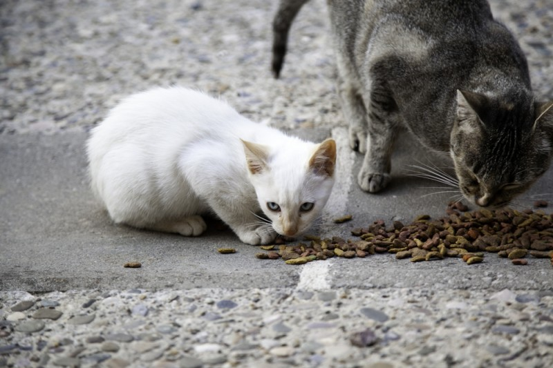 <span style='color:#780948'>ARCHIVED</span> - San Fulgencio in Alicante seeks help in campaign to manage feral cat population