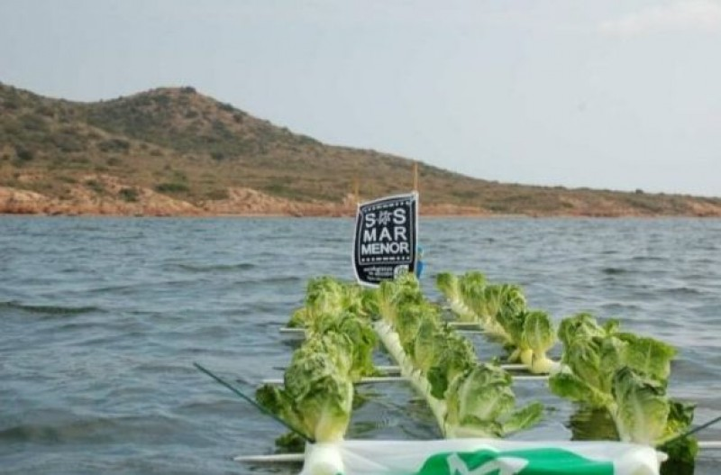 Murcia activists plant lettuce crop in middle of the Mar Menor