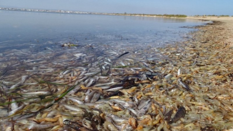 Activists mark 2-year anniversary of first load of dead fish in Mar Menor