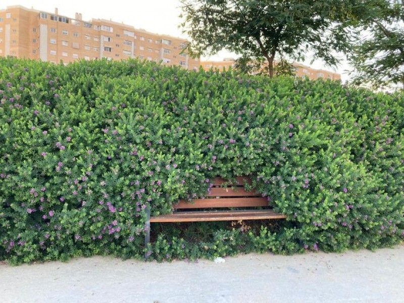 Snap of bench swallowed up by overgrown bushes in Alicante goes viral