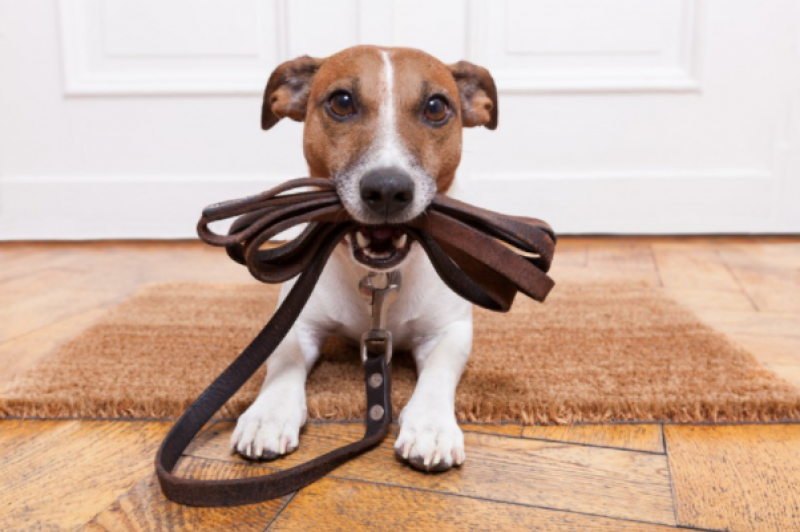 Mandatory training for dog owners in Spain: everything you need to know