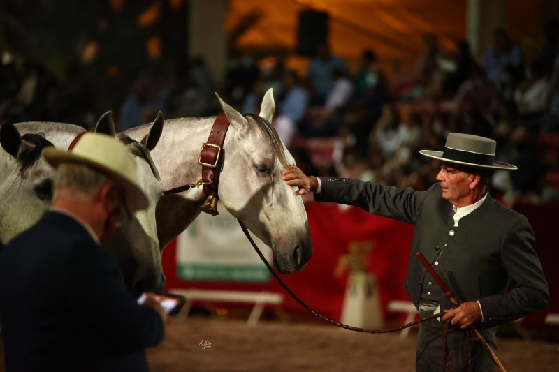 Lorca Crossed Horse Fair this weekend: October 23 and 24
