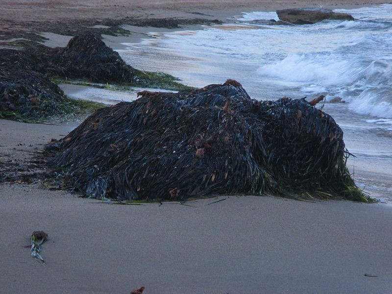 Removal of seaweed restrictions to protect Valencia coastline