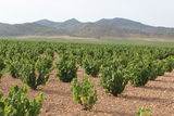 Murcia parliament states its intent to support rural and wine tourism