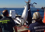 Seven tons of illegally slaughtered tuna confiscated in San Pedro del Pinatar