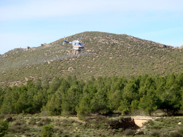 <span style='color:#780948'>ARCHIVED</span> - Processionary caterpillar spraying under way in Murcia  pine forests