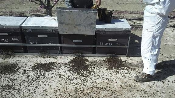 <span style='color:#780948'>ARCHIVED</span> - Murcia honey producers hit by bee deaths in Calasparra