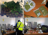 Distinctive extractor odours lead police to Mula cannabis grower