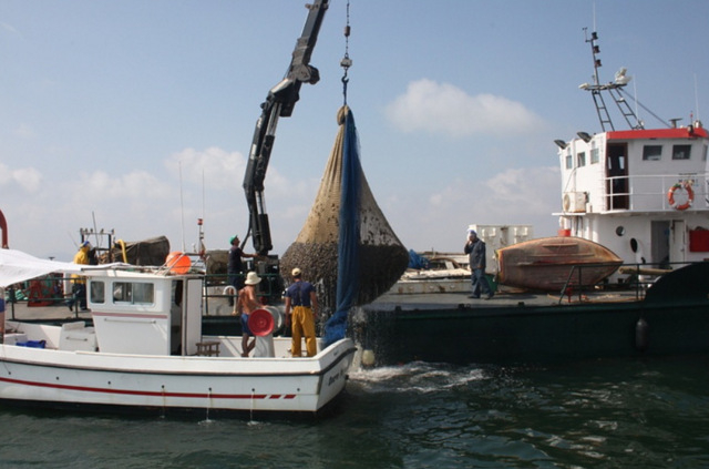 Jellyfish protection nets installed for summer in the Mar Menor from 1st June