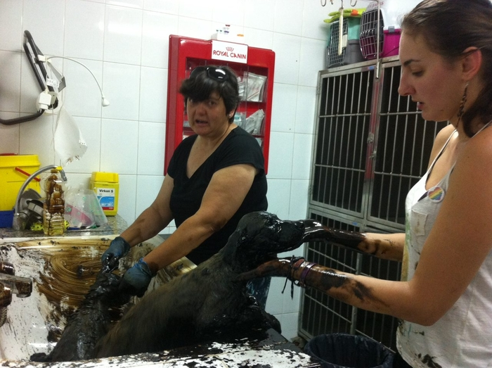 <span style='color:#780948'>ARCHIVED</span> - Cartagena puppies recovering after rescue from pool of tar in El Albujón