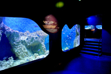 The CIMAR museum and aquarium in Aguilas