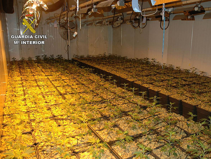 Most sophisticated marijuana plantation in Europe busted in Molina de Segura
