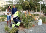 Puerto Lumbreras parks and gardens given makeover with 700 plants and trees