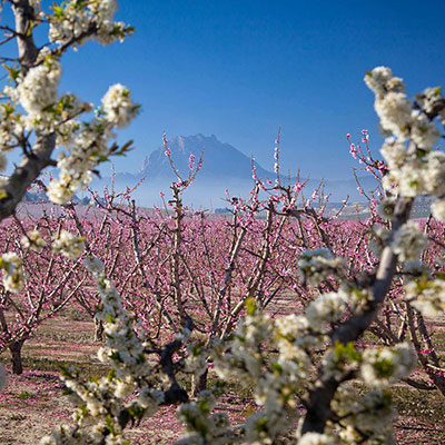 5th and 6th March discover the Cieza Floraci�n tours
