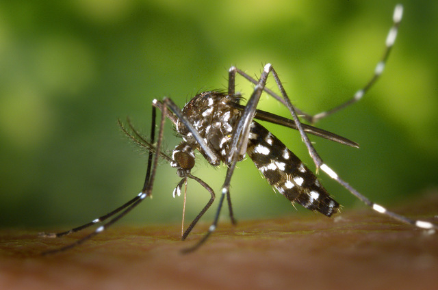 <span style='color:#780948'>ARCHIVED</span> - Murcia steps up the campaign to combat the tiger mosquito