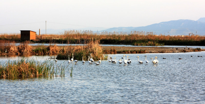 Green filters to protect the Mar Menor from fertilizer contamination