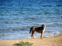 Mazarrón beaches: Playa de las Moreras, Dog friendly beach