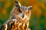 Until 31st October, ornithology exhibition in the Sierra Espuña visitors centre