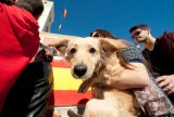 Cartagena Town Hall subsidizes dog and cat castrations