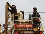 Firemen face the scratchy cat challenge in Torre Pacheco