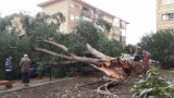 Strong winds fell large tree in central Cartagena