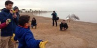 Eagle and kestrel among birds released on the shore of the Mar Menor