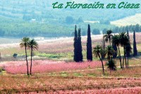 Overnight accommodation packages in Cieza for La Floración 2017