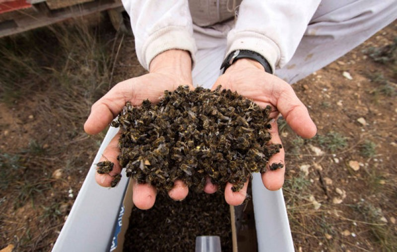 <span style='color:#780948'>ARCHIVED</span> - Murcia government investigates Mazarron bee massacre
