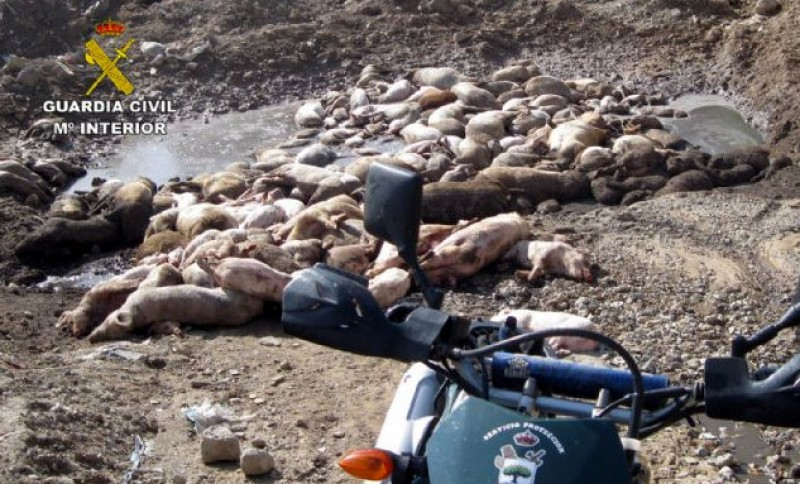 <span style='color:#780948'>ARCHIVED</span> - 100 dead pigs found rotting in the Mazarron countryside