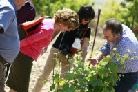 30th April free guided walk through the Yecla vineyards with wine tasting