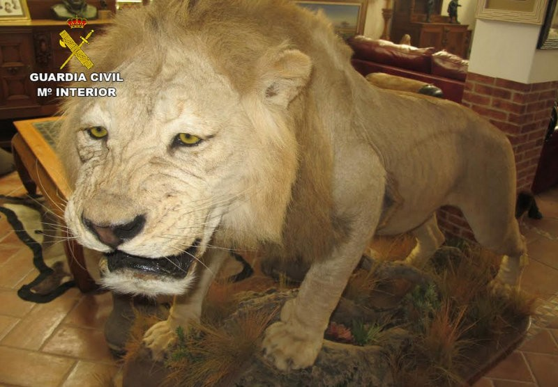 Lorca man arrested for trafficking in protected species