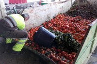 640 tons of oranges collected from the streets of Murcia
