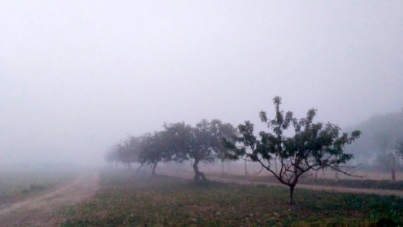 <span style='color:#780948'>ARCHIVED</span> - Fog reduces visibility at San Javier to 100 metres
