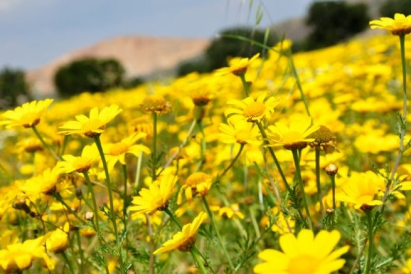 Allergy misery this spring in Murcia: help is at hand