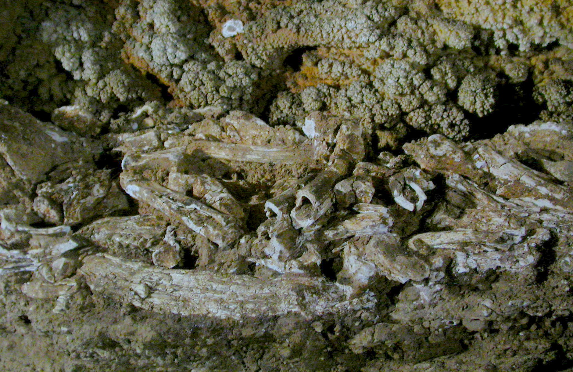 <span style='color:#780948'>ARCHIVED</span> - Cartagena Spain,  Cueva Victoria may open to the public