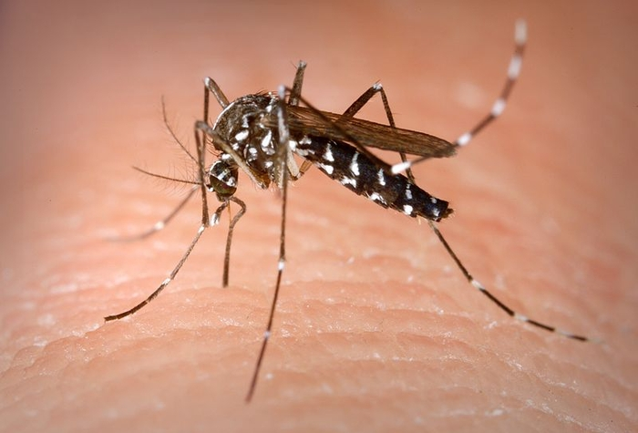 The Asian Tiger Mosquito in Spain