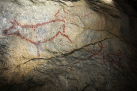 Prehistoric cave paintings at Covalanas in Cantabria
