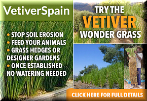 Vetiver Bulletin